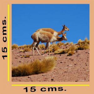 Impresión Fotográfica 15x15cm