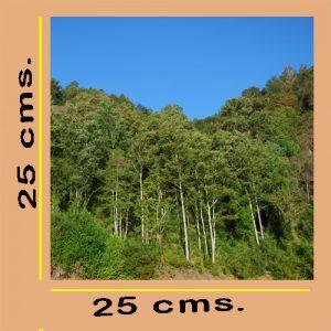 Impresión Fotográfica 25x25cm